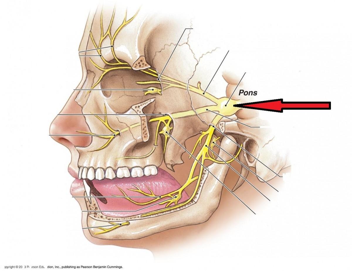 Затылочный нерв, воспаление: симптомы и лечение 64