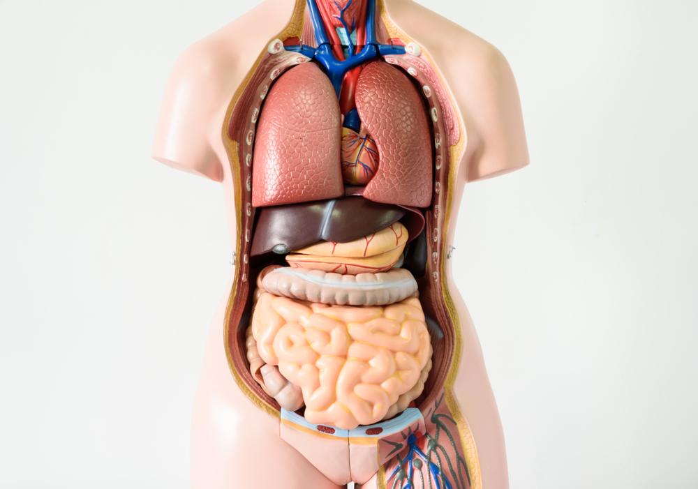 органы без которых можно прожить