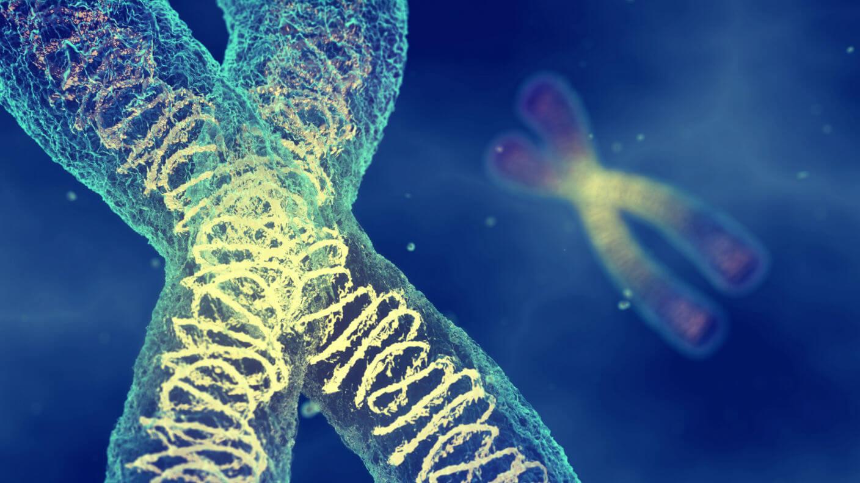 Мышечная дистрофия ДНК