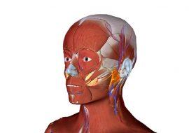 anatomt